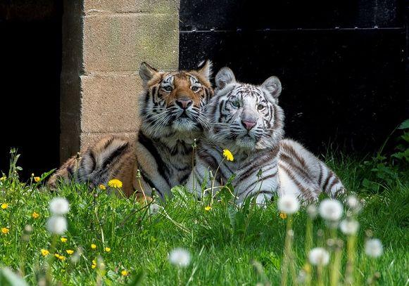 Paka en Awi zijn de ambassadeurs van het nieuwe park.