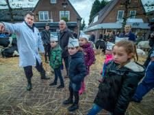 Kinderkeurmeesters op Leste Mert vallen als een blok voor de aaibare kalfjes