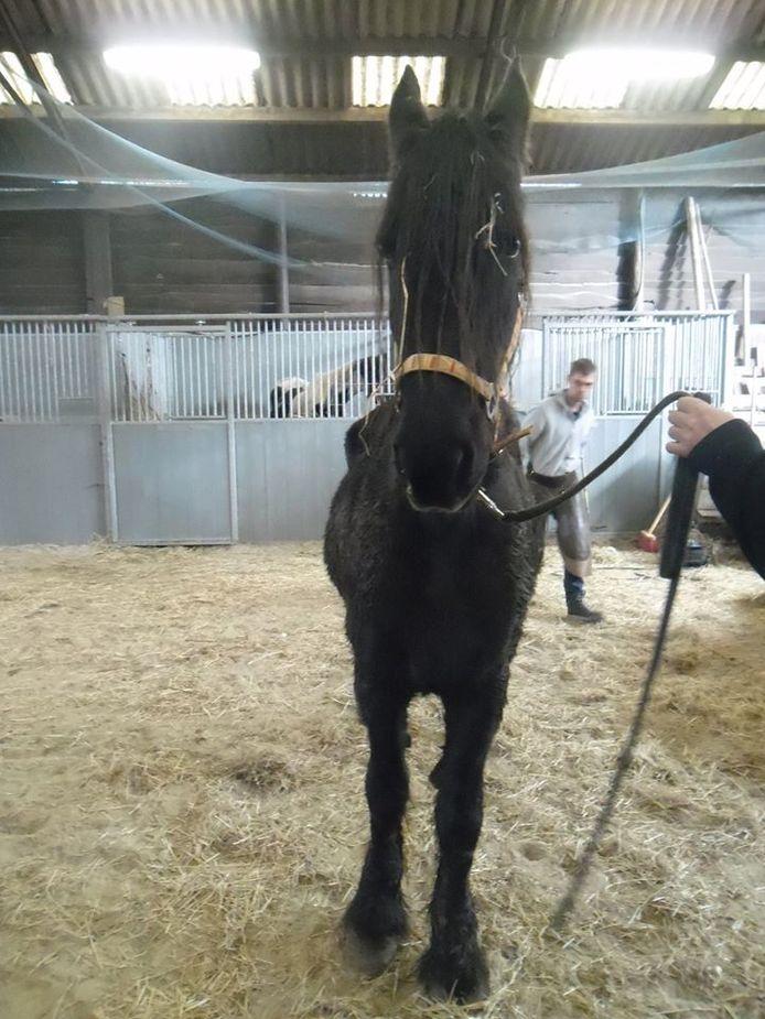 De politie nam zeven paarden in beslag
