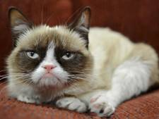Internetfenomeen Grumpy Cat overleden