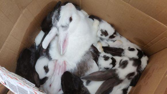 De konijnen werden afgezet bij de Ark van Pollare.