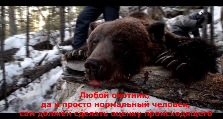 De doodgeschoten beer op een still van een filmpje dat over het doodschieten van het dier werd verspreid. Beeld YouTube