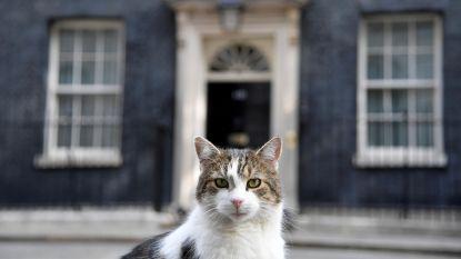 Man moet uitwijken voor kat en botst tegen paaltje: 3 maanden rijverbod