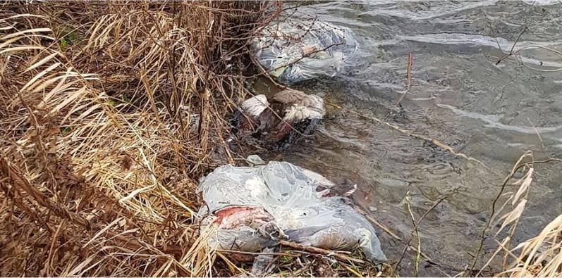 Zo'n dertig tot veertig opengesneden dieren werden in plastic zakken in het water gedumpt.