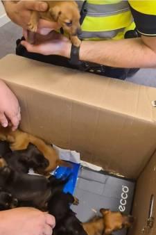 Tien gestolen puppy's teruggevonden in gemeente Heusden, moederhond Luna (3) met grof geweld gedood