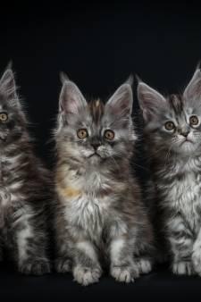 Pasgeboren kittens gedumpt in tasje in Brediuspark Woerden