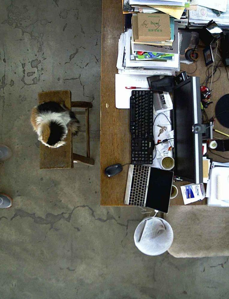 De kat van Ai Wei Wei op de webcam die 24 uur per dag aanstond Beeld null