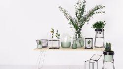 De beste budgetstuks (onder de 50 €) om je interieur een lentetoets te geven