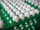 NVWA: 138 pluimveebedrijven blijven dicht
