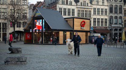En plots loopt er een koe over de Grote Markt (met dank aan Qmusic)
