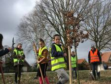 Leerlingen herplanten 23 'stormbomen' in Helenaveen