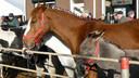 Het is schuifelen langs stront en stro - nat van de regen en de urine - het is goed om je heen kijken of er niet een paard aankomt. Of achteruit stapt.