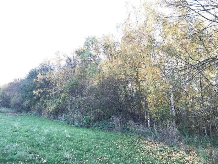 In dit bosje verbleef enkele maanden geleden nog een dakloos koppel.