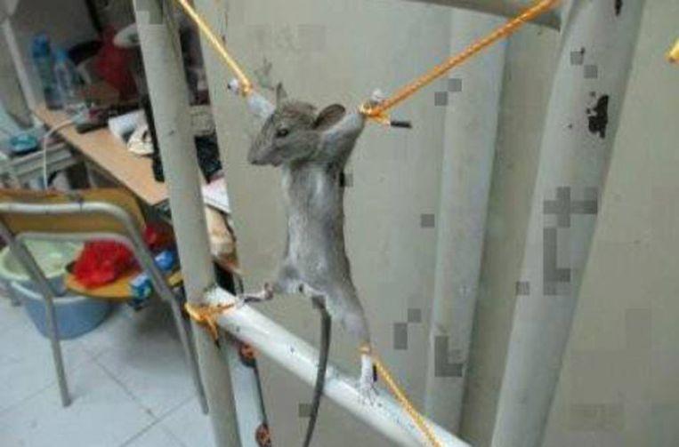 De dierenbeul postte een foto van de gemartelde rat op Facebook.
