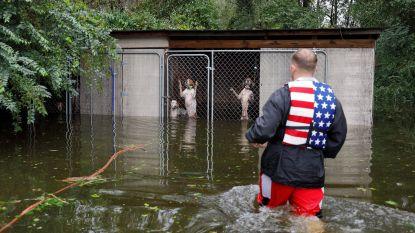 Honden zitten angstig opgesloten in kooi tijdens storm Florence. Gelukkig is hun redding nabij