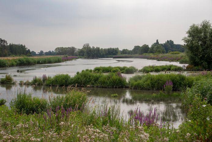 De knijten planten zich voort in dit overstromingsgebied.