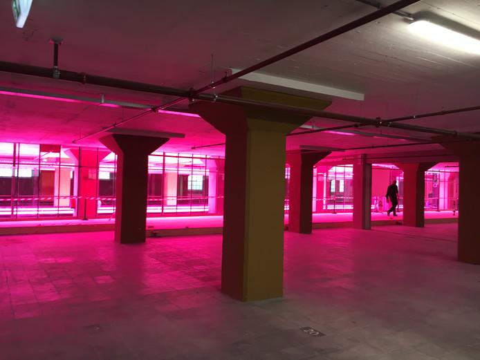 De 5de verdieping van het Veem op Strijp-S kleurt rose van de ledlampen boven de planten van stichting Duurzame Kost.