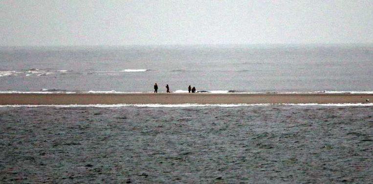 Medewerkers van zeehondencentrum Pieterburen bij de overleden bultrug. Beeld anp