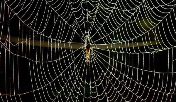 Wat de spin zoal verorbert