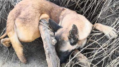 """Baasje ontzet nadat ze hond vindt in illegale vossenval: """"30 minuten later en ze was dood"""""""