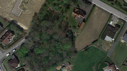 """Natuurpunt vraagt gemeente om privébos op bouwgrond te kopen: """"Anders verdwijnen 80 jaar  oude bomen"""""""
