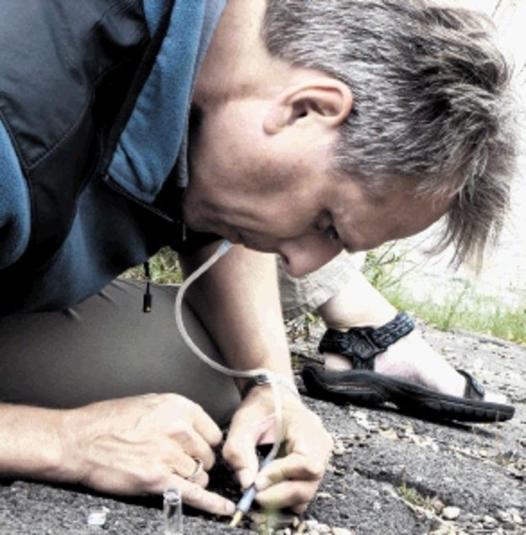 Matty Berg ontdekt elk jaar wel een nieuwe soort. (FOTO MONICA WESSELING) Beeld