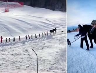 Trekpaard sleept skiërs naar boven nu lift door corona gesloten is