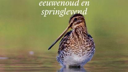 Natuurpunt Scheldeland maakt rijk geïllustreerd boek over de Kalkense Meersen