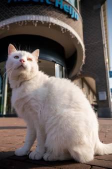 Zuid-Holland besteedt 50.000 euro aan zwerfkatten
