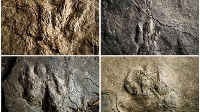 Perfect bewaarde sporen van dinosaurussen ontdekt in Amerikaans natuurpark