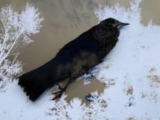 Vogelopvang Utrecht moet dicht: 'Straks kunnen gewonde vogels nergens naartoe en gaan ze dood'