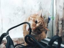 Aan kabels knagende kat veroorzaakt kortsluiting en brand in transformatorhuisje