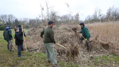 OPGEPAST: ringslangen jagen op kikkers in Meldertbos