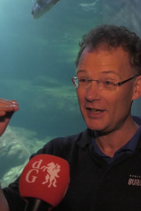 'Wereldprimeur': anticonceptie voor Arnhemse adelaarsrog