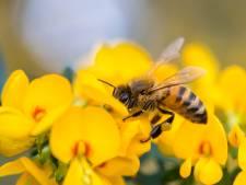 Bijen bedreigd: oproep om vandaag half uurtje bijen te tellen