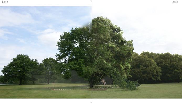 Wereldboom Waalwijk nu en straks