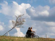 Miljoenenfiasco compleet: laatste 610 bomen Witte Lint bij Zutphen verdord