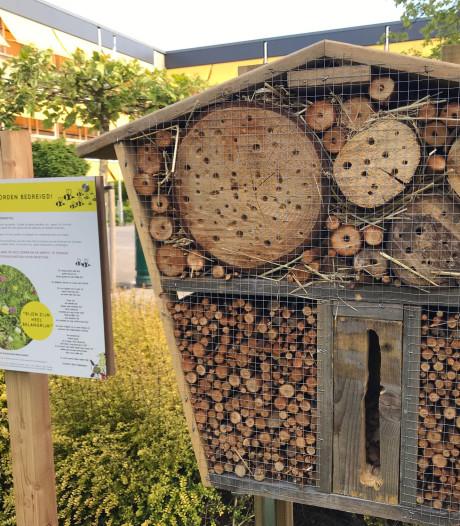 Insectenhotels in Meierijstad? Kinderen stemmen hierover