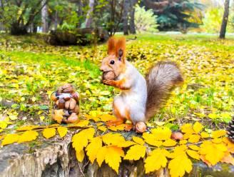 Man (61) sterft aan zeldzame hersenaandoening na eten van hersens eekhoorn