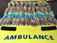 4.000 troostberen gedoneerd aan Ambulancedienst