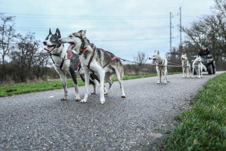 'Als ze merken dat ze weer mogen rennen, worden ze helemaal gek' Beeld Eva Plevier