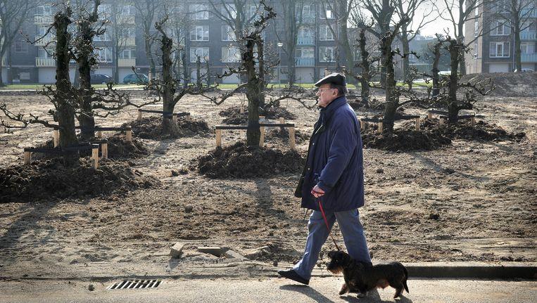 Heerlen, 2011. Hier zijn op de plaats van gesloopte flats fruitbomen geplant. Alles is beter dan leegstand. Beeld Marcel van den Bergh