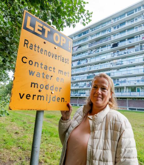 'Kometenlaan in Bilthoven is de McDrive voor ratten'