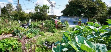 Potager pollué aux métaux lourds: résultats rassurants pour les habitants de Bressoux