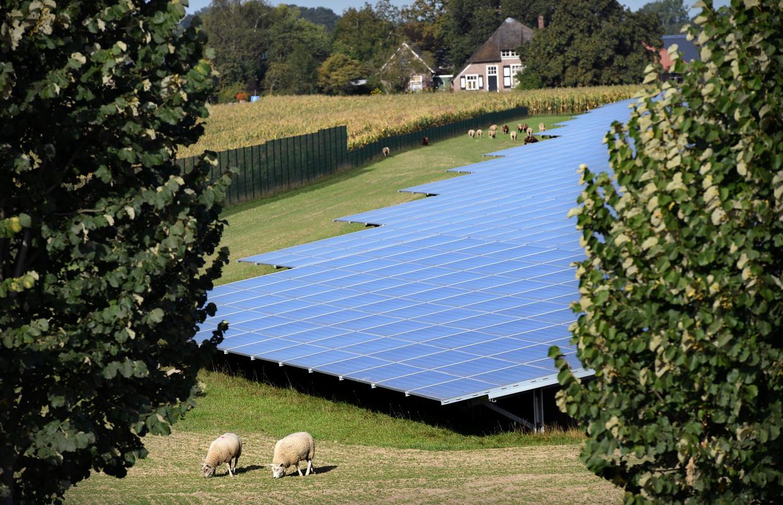 Met 38 hectare en 117 duizend zonnepanelen heeft Voorst de grootste zonneakker van Gelderland.  Beeld Marcel van den Bergh / de Volkskrant