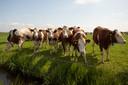 Ook melkveehouders zouden dreigbriefjes in de bus hebben gehad. Foto ter ilustratie.