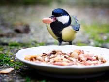 Vogelaars gezocht voor driedaagse tuintelling