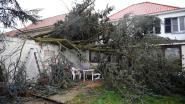 VIDEO. Boom belandt op veranda, dakpannen waaien weg, trampoline kiest het luchtruim: brandweer heeft handen vol