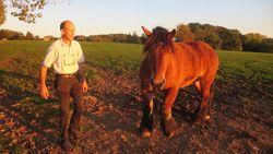 """Paard via neusgaten doodgeschoten: """"Dader moet een psychopaat zijn"""""""