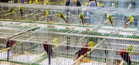 Zakkenrollers en vogeldieven slaan toe op Zwolse vogelbeurs